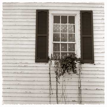 41-Ivy-Window